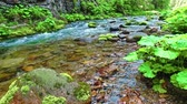 polsko : Small stream in the Tatra mountains in Koscieliska in summer