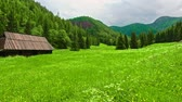 turístico : Green valley Jaworzynka in the Tatra Mountains in the summer, Poland