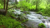 hiking trail : Small stream near Jaworzynka Valley, Tatra Mountains in the summer