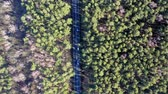 Forest aerial drone view. Road with cars in forest from above Stock Footage