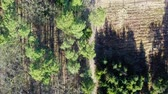 caminho : Aerial view of wonderful forest with multicolored trees in Poland