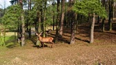 Herd of deer in the forest on a sunny day