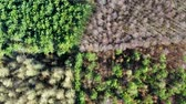 разноцветные : Flying above green field and forest with multicolored trees