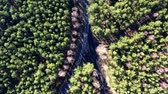 caminho : Aerial view from above of crossroads in the  forest