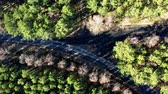 Crossroads in the forest, aerial view from drone