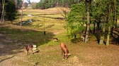Forest and herd of deer in sunny spring Stock Footage