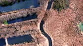 Yellow swamps and blue river, aerial view from drone Stock Footage