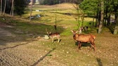 vermelho : Herd of deer in the spring forestin sunny day, Poland