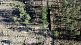 destruído : Flying above deforestation after hurricane, environmental destruction