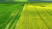сельскохозяйственный : Yellow rape fields in the summer, aerial view, Poland