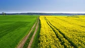 сельскохозяйственный : Flying above green and yellow rape fields in the spring, Poland Стоковые видеозаписи
