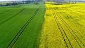 сельскохозяйственный : Green and yellow rape fields in the spring, aerial view, Poland