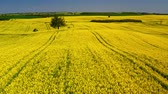 ropa : Green and yellow rape fields in sunny day, aerial view, Poland