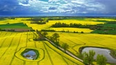 сельскохозяйственный : Flying above yellow rape fields in cloudy day, Poland