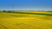 Big and yellow rape fields and wind turbine in the spring, Poland