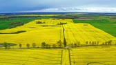 Stunning yellow rape fields from above, Poland Stock Footage