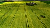 gerte : Flying above yellow and green rape fields in spring, Poland Stock Footage