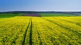 сельскохозяйственный : Yellow and green rape fields in spring in Poland, aerial view Стоковые видеозаписи