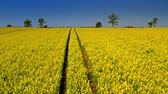 gerte : Yellow rape fields in spring from above, Poland Stock Footage