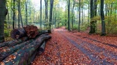 идиллический : Wonderful footpath full of leaves and old trees in the autumn forest, Europe