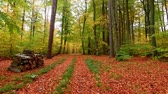 ahorn : Stunning footpath full of brown and green leaves in the autumn forest, Europe
