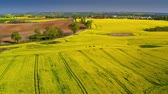 fiori : Yellow rape fields in spring from above, Poland Filmati Stock