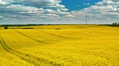 klima : Flying above yellow rape fields and wind turbine, Poland Stock Footage