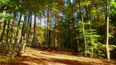 setembro : Breathtaking autumn forest in sunny day with sunbeam, Poland