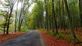 ahorn : Asphalt road in an autumn colored forest, Poland Stock Footage