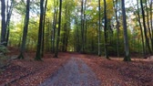 setembro : Brown, gold and green forest in the autumn, Poland, Europe Stock Footage