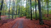 setembro : Footpath in forest with old trees and colorful leaves in the autumn, Poland