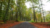 setembro : Dark road in an autumn colored forest in Poland
