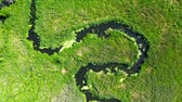 pântano : River winding among the green swamps, view from above, Poland