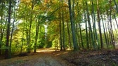 Sunny day in autumn forest with sunbeam, Poland Stock Footage