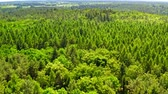 Green forest in summer, aerial view, Poland