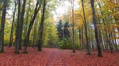 Footpath in forest with old trees and colorful leaves in autumn, Poland