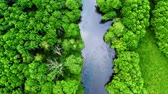 Aerial view of stunning old green forest and river in Tuchola natural park, Poland Stock Footage