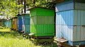 Colorful wooden beehives in the summer garden, Poland Stock Footage