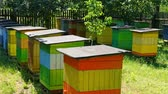 Wooden beehives with bees in countryside in summer, Poland Stock Footage