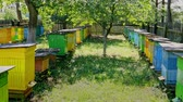 Natural beehives in sunny day in summer, Poland