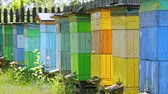 Ecological apiary with beehives in the garden, Poland Stock Footage