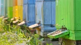 Many colorful hives surrounded by fruit trees, Poland Stock Footage