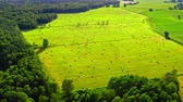 Aerial view of sheaves of hay on green field in summer Stock Footage