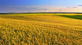 Aerial view of golden ears of wheat and wind turbines at sunset Stock Footage