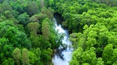 Stunning river and old green forest in Tuchola natural park, view from above, Poland