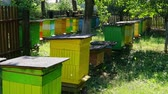 Wooden colorful beehives with bees in countryside, Poland in summer