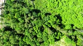Aerial view of green forest in summer, Poland Stock Footage