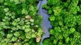 Old green forest and river in Poland, aerial view, Tuchola national park