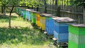 Few beehives in sunny day in summer, Poland