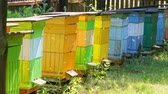 Ecological beehives with bees in countryside, Poland in summer